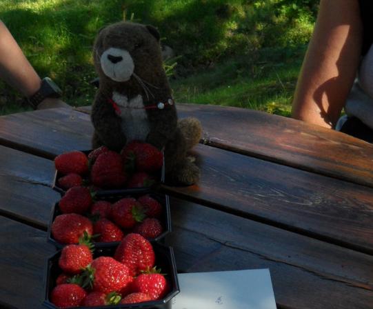 jordbær2